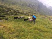 Ja es gibt auch Schafe in den Bergen